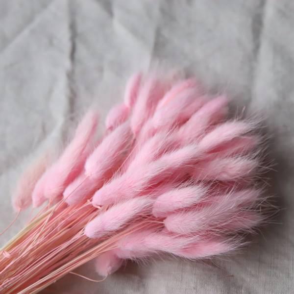 Bilde av Cooee Lagurus, faded pink